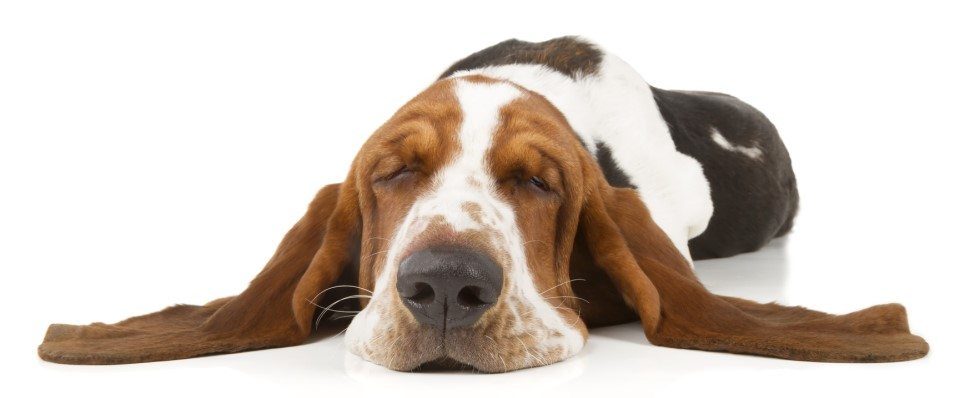 Have a Better Behaving Dog With Some Simple Dog Training Tips