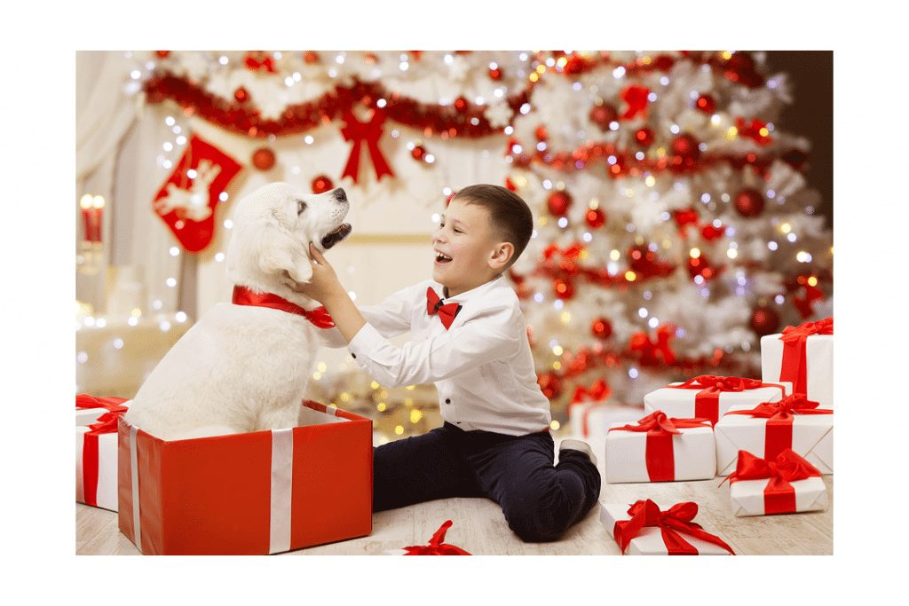 Why Getting a Pet for Christmas Can Be a Mistake
