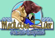 Veterinarian | Animal Hospital