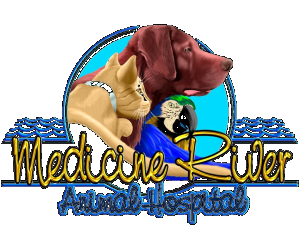 Medicine River Animal Hospital Madeira Beach FL 33708
